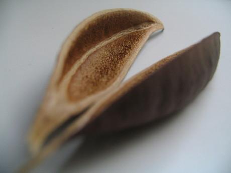 Seed_pod_12